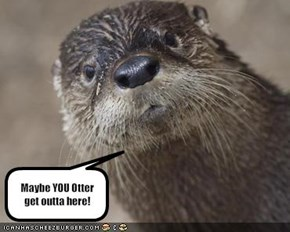 Maybe YOU Otter