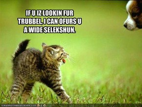 IF U IZ LOOKIN FUR TRUBBEL, I CAN OFURS U A WIDE SELEKSHUN.