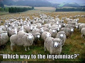 """Which way to the insomniac?"""