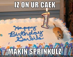 IZ ON UR CAEK  MAKIN SPRINKULZ
