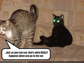 ...and, as you can see, that's what REALLY happens when you go to the vet.