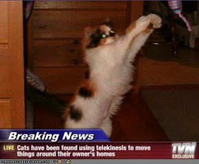 Breaking News - Cats have been found using telekinesis to move things around their owner's homes