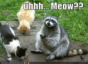 uhhh... Meow??