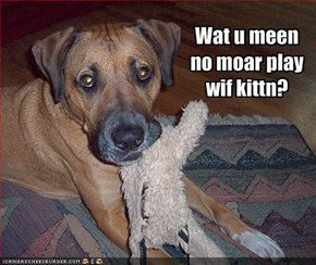 Wat u meen no moar play wif kittn?