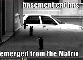 basement cat has  emerged from the Matrix