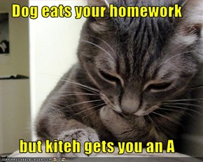 Dog eats your homework  but kiteh gets you an A