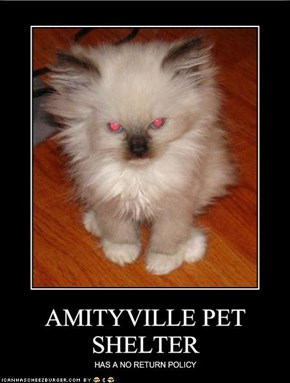 AMITYVILLE PET SHELTER