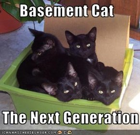 Basement Cat     The Next Generation