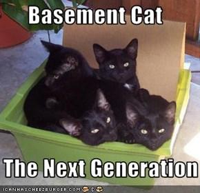 Basement Cat     The Next Generation