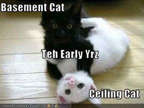 Basement Cat Teh Early Yrz Ceiling Cat