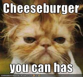 Cheeseburger    you can has
