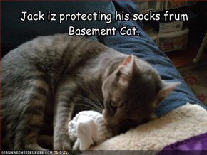Jack iz protecting his socks frum  Basement Cat.