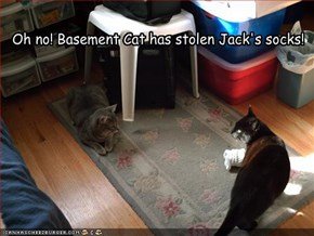 Oh no! Basement Cat has stolen Jack's socks!