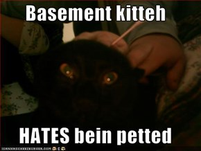 Basement kitteh  HATES bein petted