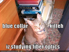 blue collar                    kitteh iz studying fiber optics