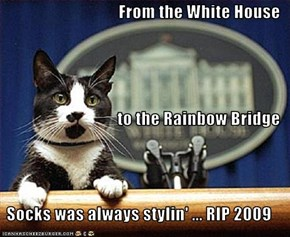 From the White House to the Rainbow Bridge Socks was always stylin' ... RIP 2009