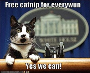 Free catnip for everywun  Yes we can!