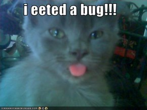 i eeted a bug!!!