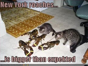 New York roaches...  ...is bigger than expekted