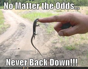 No Matter the Odds...  Never Back Down!!!