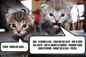 HAI - U DOIN A LOL - CAN WE BE IN IT - WE R GUD LOL CATS - WE'LL MAKE U FAMUS - CUMON TAKE OUR PICHUR - MAKE US A LOL - PEESE