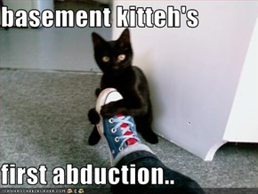 basement kitteh's  first abduction..