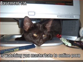 Basement cat  is watching you masterbate to online porn