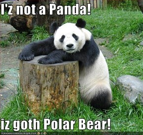 I'z not a Panda!  iz goth Polar Bear!