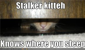 Stalker kitteh  Knows where you sleep