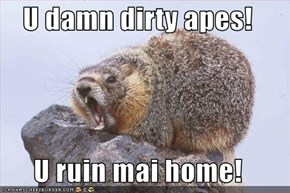 U damn dirty apes!  U ruin mai home!