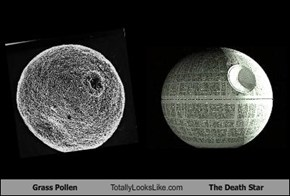 Grass Pollen Totally Looks Like The Death Star