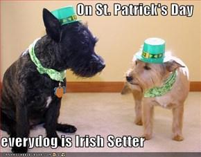 On St. Patrick's Day  everydog is Irish Setter
