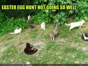 EASTER EGG HUNT NOT GOING SO WELL . . .
