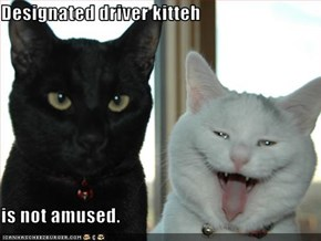 Designated driver kitteh  is not amused.
