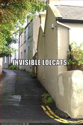 INVISIBLE LOLCATS