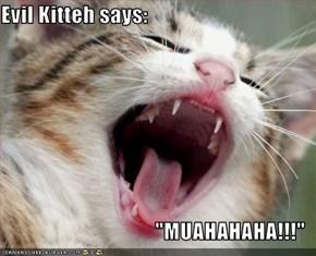 """Evil Kitteh says:  """"MUAHAHAHA!!!"""""""