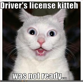 Driver's license kitteh  was not ready...