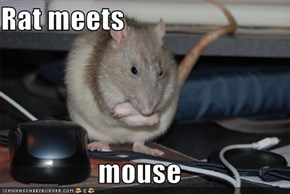 Rat meets  mouse