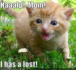 Haaalp!  Mom!  I has a lost!