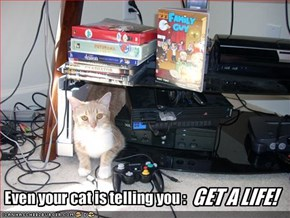 Even your cat is telling you :