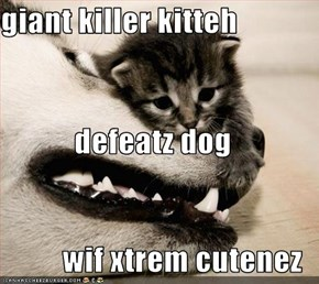 giant killer kitteh defeatz dog wif xtrem cutenez