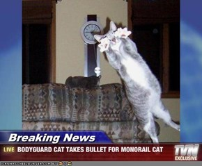 Breaking News - BODYGUARD CAT TAKES BULLET FOR MONORAIL CAT