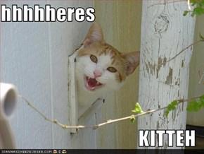 hhhhheres  KITTEH