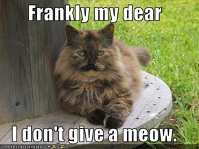 Frankly my dear  I don't give a meow.