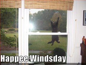 Happee Windsday