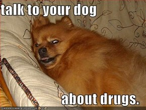 talk to your dog  about drugs.