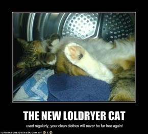 THE NEW LOLDRYER CAT