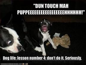 """""""DUN TOUCH MAH PUPPEEEEEEEEEEEEEEEEEHHHHHH!"""""""
