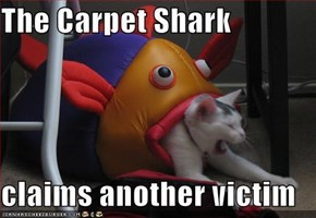 The Carpet Shark  claims another victim