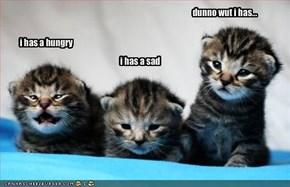 i has a hungry